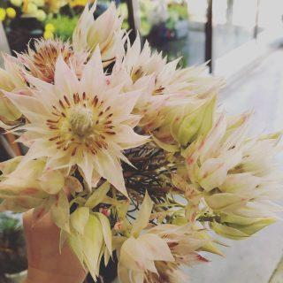 花はる古座川店の生花1