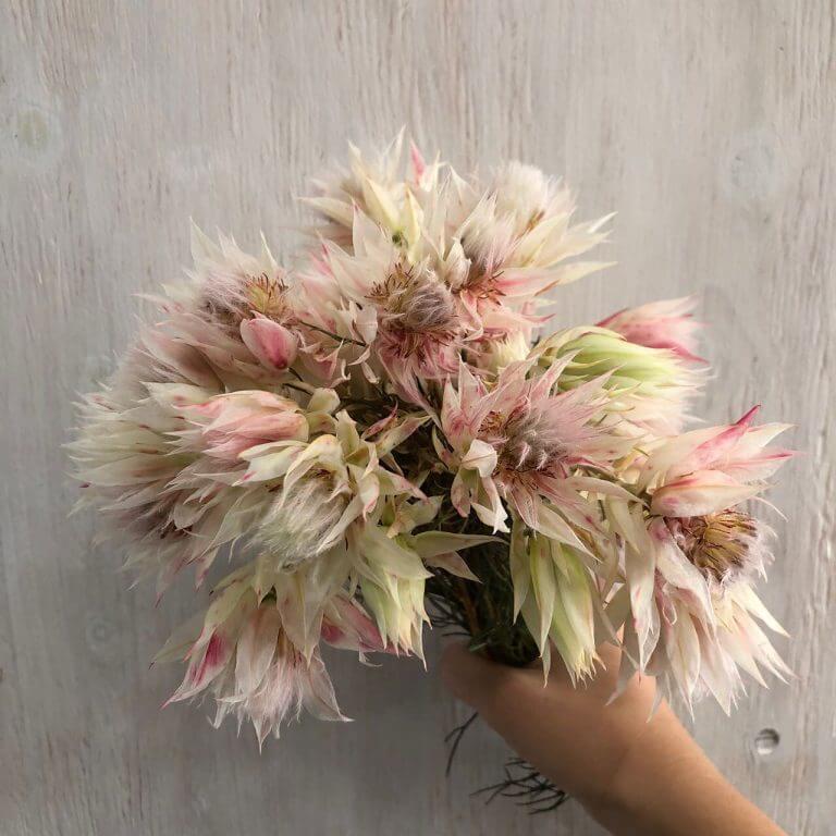 花はる古座川店のセルビアの花2